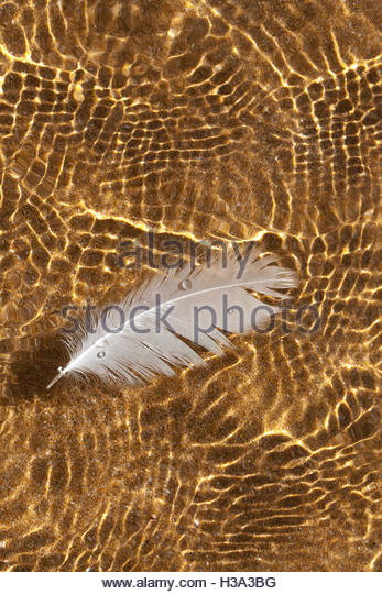 Feather On Surface Of Water - Stock Image