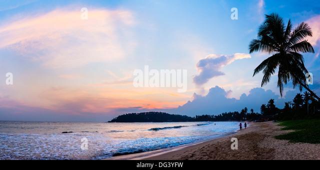 Mirissa Beach, palm tree at sunset on the Indian Ocean, South Coast, Southern Province, Sri Lanka, Asia - Stock Image