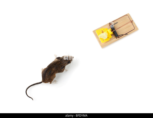 Mouse and mousetrap - Stock Image