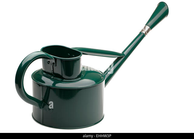 Green painted galvanised two and a half litre long reach watering can with rose - Stock Image