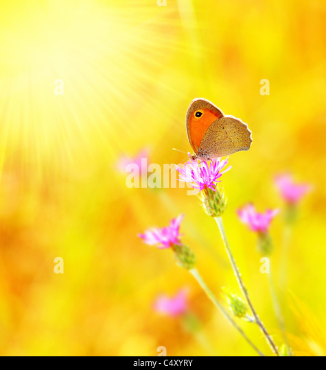 Beautiful yellow butterfly extreme closeup macro, nature life in spring - Stock Image