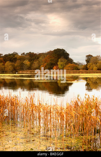 Northumberland, England; Water And The Shoreline In Autumn - Stock Image