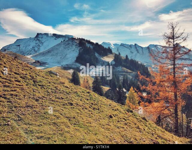 Autumn tree with snow covered mountain range - Stock Image