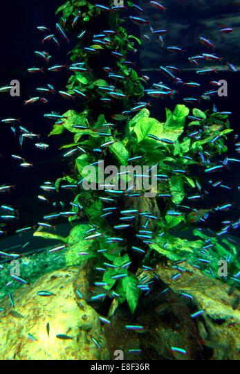 Aquarium, Loro Parque, Tenerife, Canary Islands, 2007. - Stock Image
