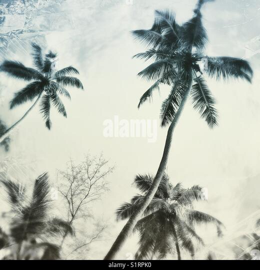 Abstract tropical palms - Stock Image