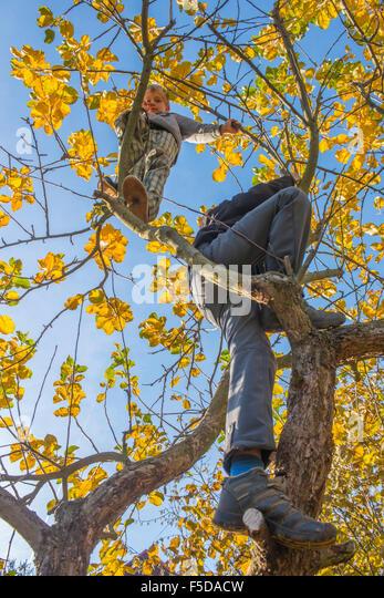 Child Boy on Tree climbing, sunny day, blue sky - Stock Image