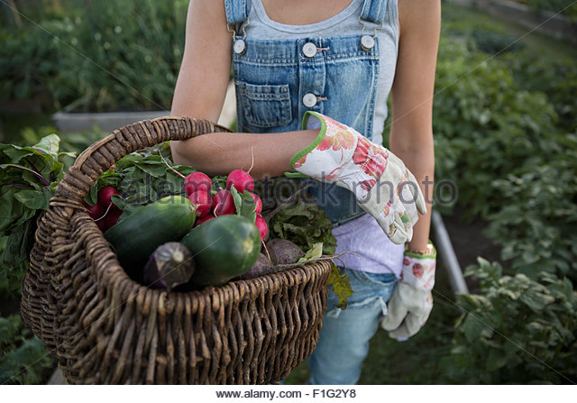 Close up woman holding fresh harvested vegetables basket - Stock Image