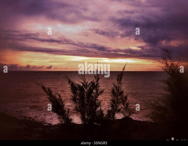 Trees silhouette at sea - Stock Image