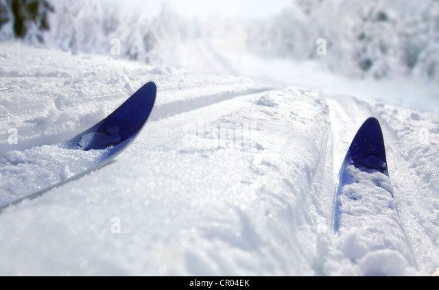 Cross Country Ski - Stock Image