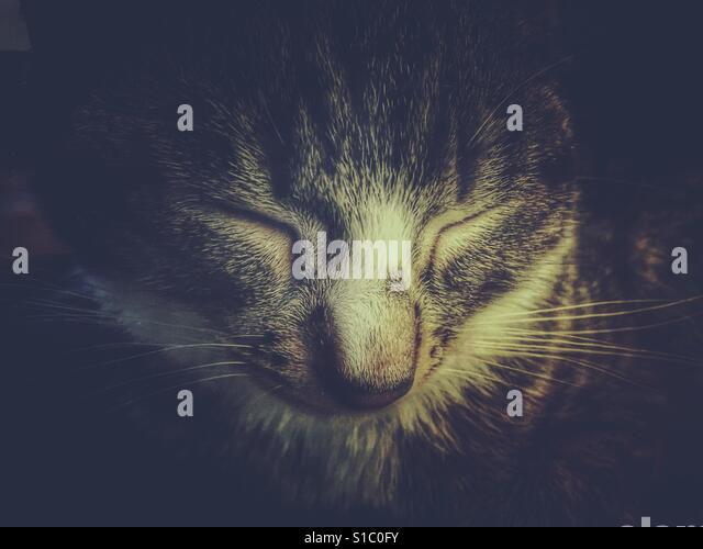 Sleeping tabby kitten - Stock-Bilder