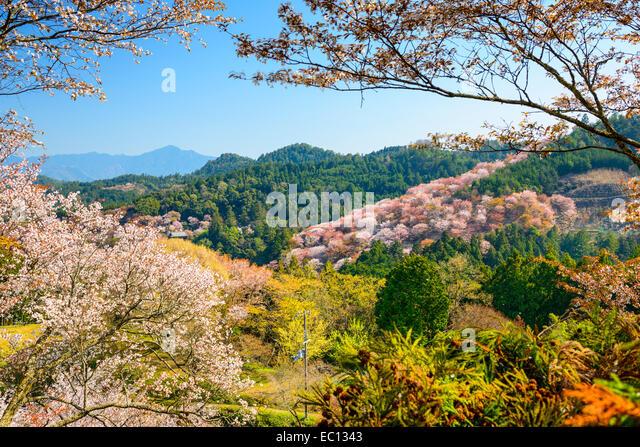 Yoshinoyama, Nara, Japan spring landscape. - Stock Image