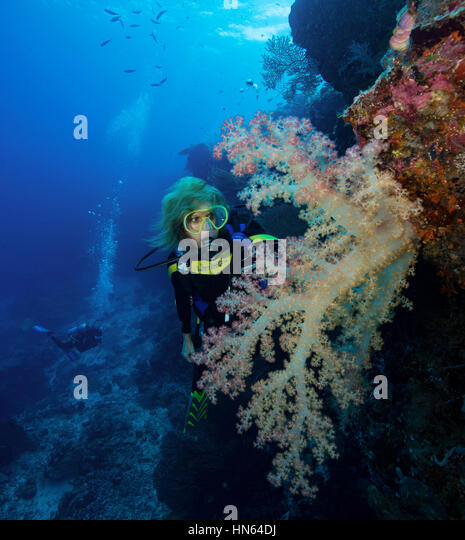 Diver looking at pastel-colored soft coral. - Stock-Bilder