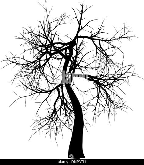 Silhouette of a winter tree - Stock Image
