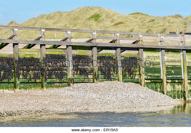 Shoal bank at the side of a river estuary at low tide, in Littlehampton, West Sussex, England, UK. - Stock Image