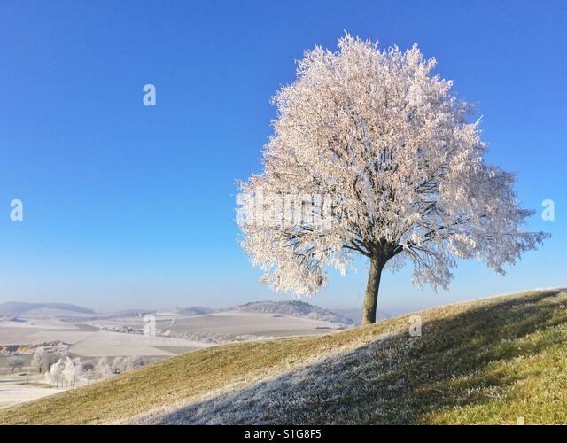 Winter scenery in very cold morning - Stock-Bilder