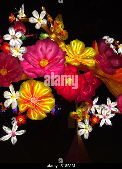 Silk lantern flowers - Stock-Bilder