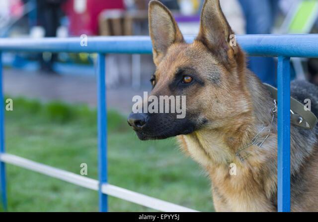 Mistley Place Dog Rescue