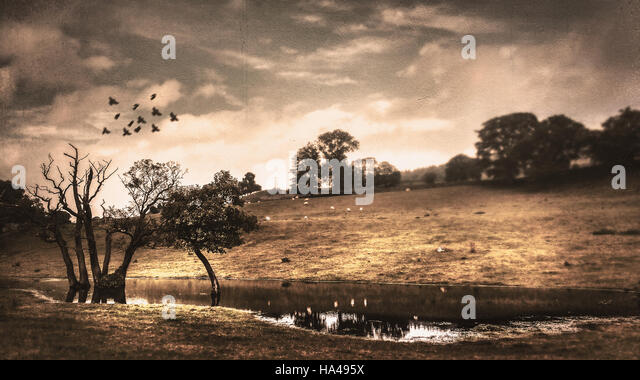 panoramic landscape with trees ,hills,trees,water,and flock of bird - Stock Image