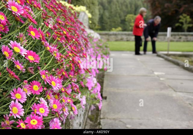 UK, England, Rothbury, Cragside, Formal Garden, flowers, - Stock Image