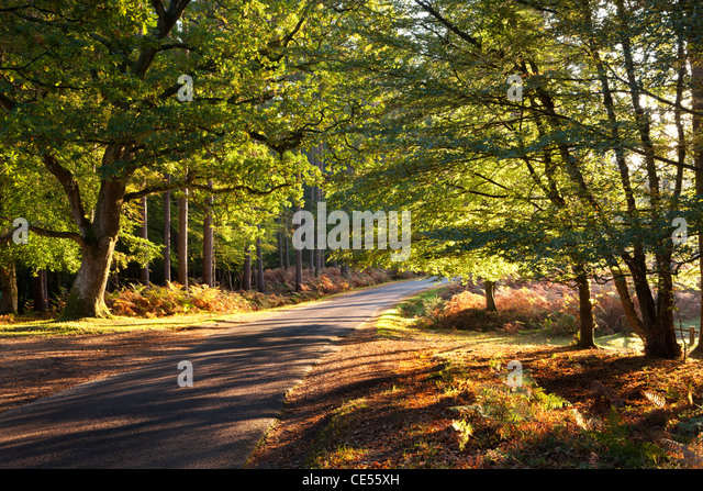 Forest road through autumnal trees, New Forest, Hampshire, England. Autumn (October) 2011. - Stock Image