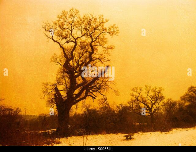 Winter landscape tree - Stock Image