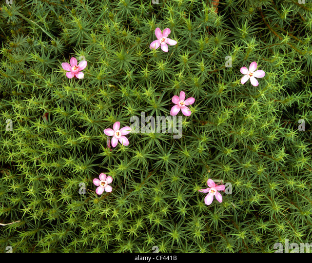 Wild flowers emerge to decorate a patch of green moss. - Stock-Bilder
