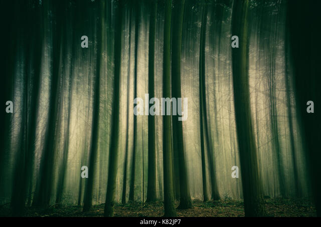 Abstract of trees in a forest - Stock Image