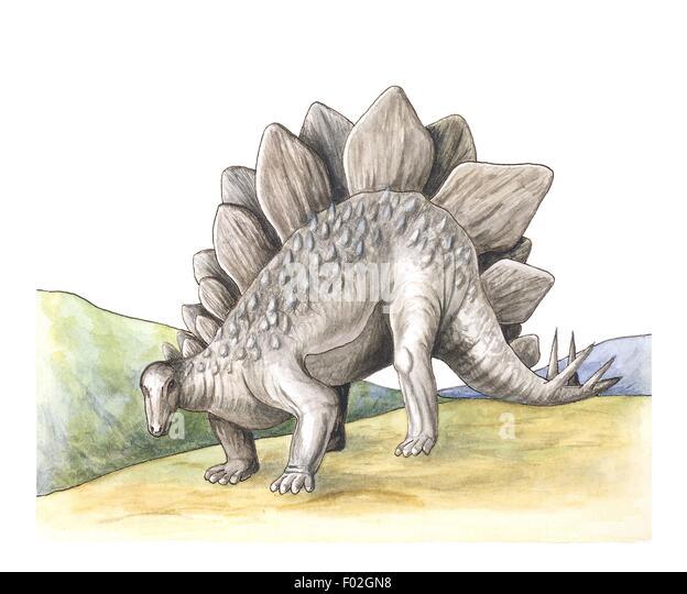 Stegosaurus, illustration - Stock Image