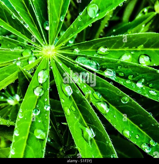 Water drops on green plant - Stock-Bilder