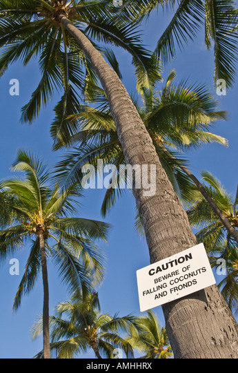 Sign warning about falling coconuts on palm tree in Hale Halewai Park Kailua Kona Island of Hawaii - Stock Image
