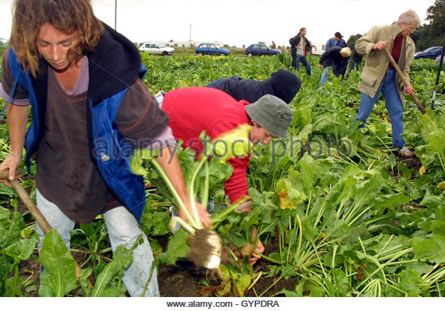 gentically modified foods Genetically modified (or gm) plants have attracted a large amount of media attention in recent years and continue to do so despite this, the general.