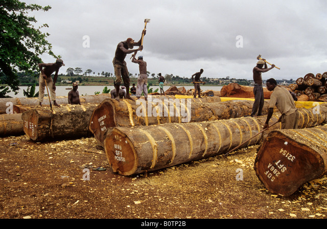 Abidjan, Ivory Coast, Cote d'Ivoire, West Africa. Burkinabe Laborers Stripping Bark from Logs prior to Export - Stock Image