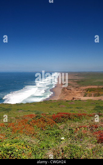 Wildflower Field above Ten Mile Beach - Stock Image
