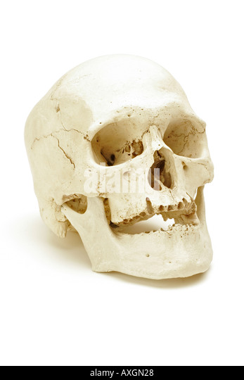 Real human skull on a white background - Stock Image