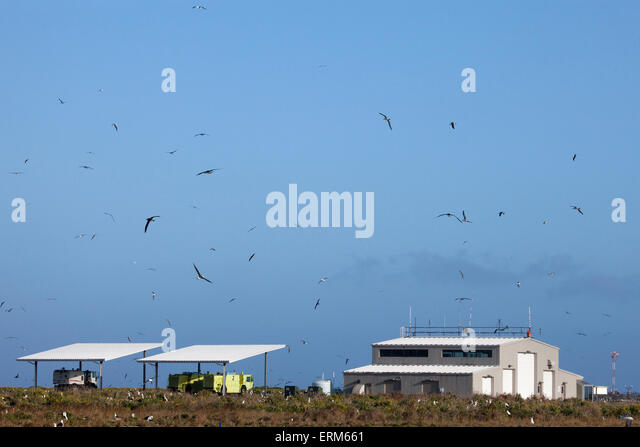 Laysan Albatrosses soar over Midway Atoll Airport, Henderson Field - Stock Image