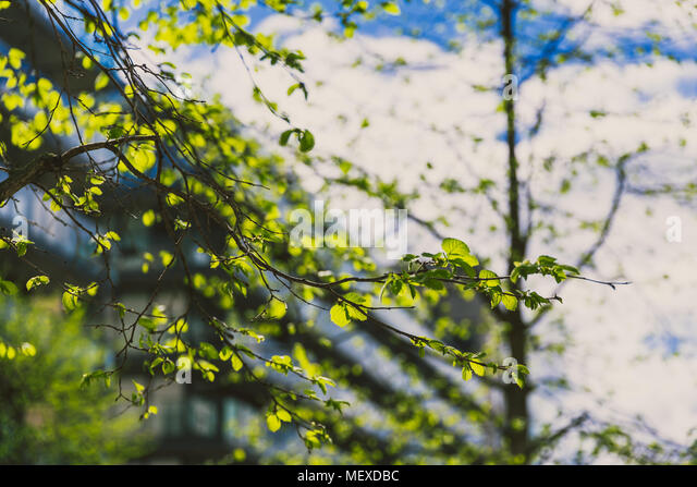 tree branches shot at shallow depth of field with modern building in the background - Stock Image