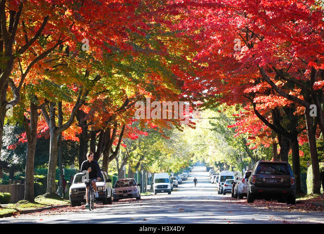 Vancouver, Canada. 12th Oct, 2016. Red leaves are seen at a street in Vancouver, Canada, Oct. 12, 2016. Streets - Stock Image