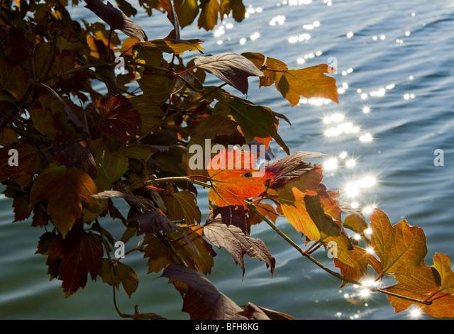 idyll autumn ambience still stilllife last leaf leaves harvest autumnal colouring fall foliage idyllic sun bright - Stock Image