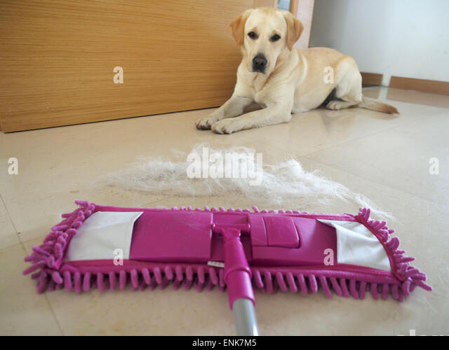 Best Floor Mop For Dog Hair