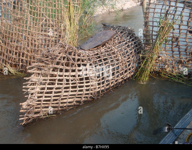 fish trap stock photos fish trap stock images alamy. Black Bedroom Furniture Sets. Home Design Ideas