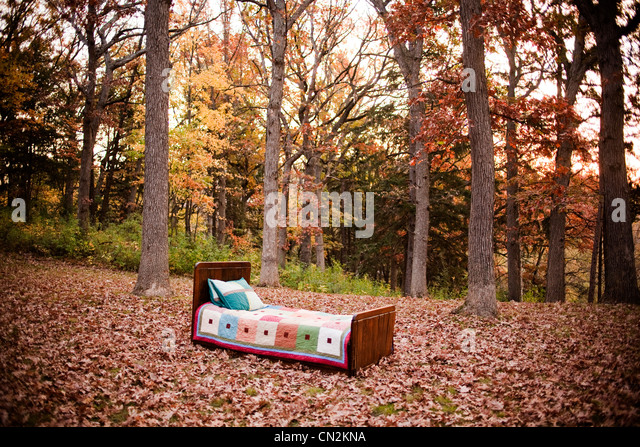 Empty bed in forest - Stock Image