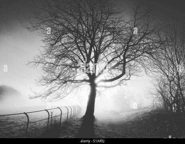 Silhouetted tree in winter Matlock Bath Derbyshire Peak District UK - Stock-Bilder
