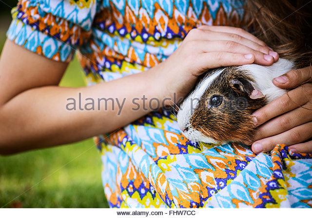 Little girl petting guinea pig - Stock-Bilder