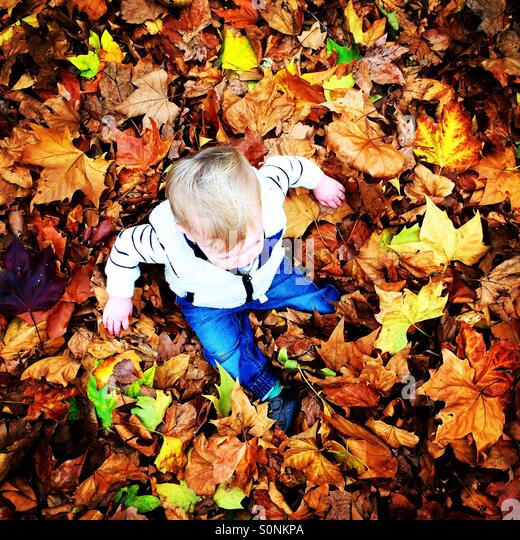 Little boy sat in pile of autumnal leaves - Stock Image