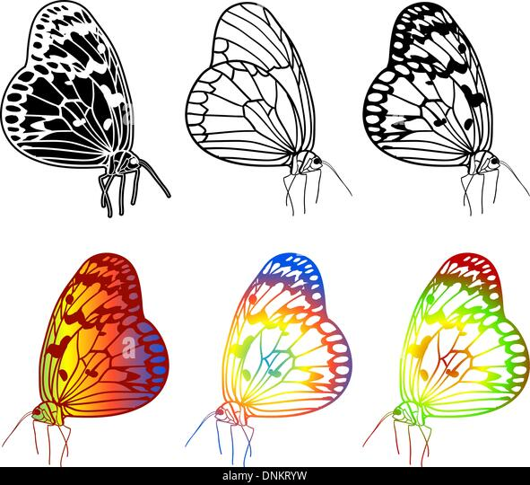 Vector set of beautiful butterflies. - Stock Image