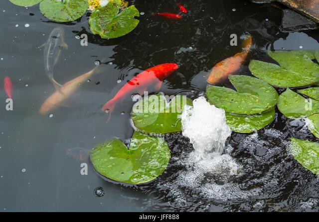 Koi pond fountain stock photos koi pond fountain stock for Artificial koi fish