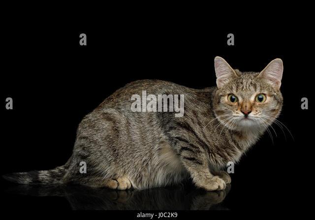 kitten___