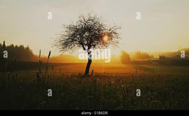 Tree in a barn during sunset - Stock-Bilder