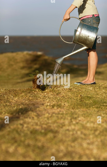 Woman watering sapling sprouting from tree stump, cropped - Stock Image
