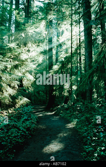 Sunlight streams through the canopy along a trail in Olympic National Park in Washington state COPYRIGHT DUANE BURLESON - Stock Image